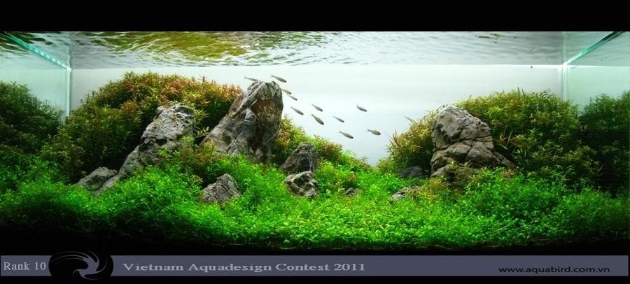 bể thủy sinh vadc 2011 truongfo