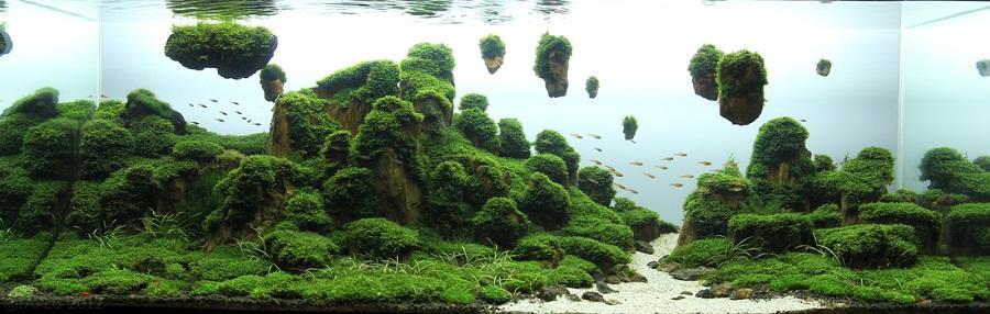 bể thủy sinh Green Paradise hạng 26 iaplc 2012