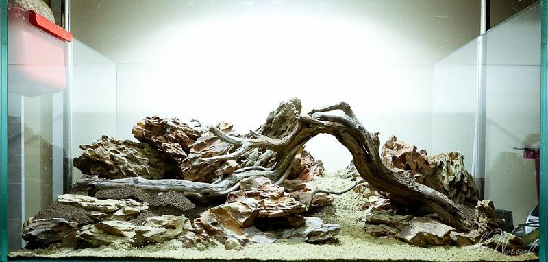lũa đá trong bể thủy sinh