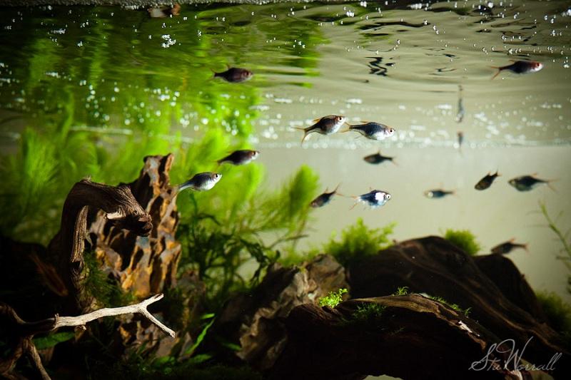 ánh sáng trong bể thủy sinh mô phỏng rạng đông