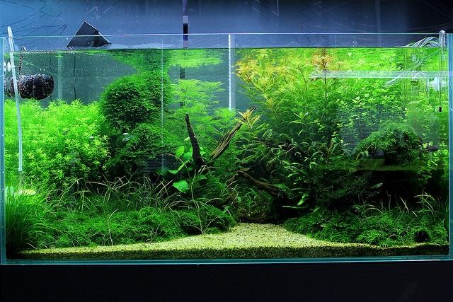 bể thủy sinh nhiều cây