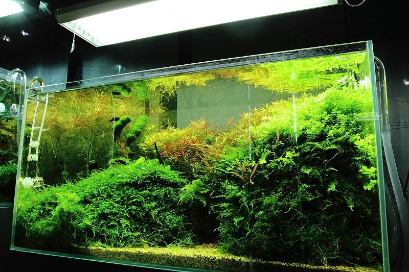 rừng rậm trong bể thủy sinh