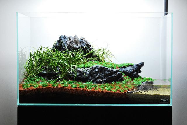trồng cây thủy sinh vào hồ