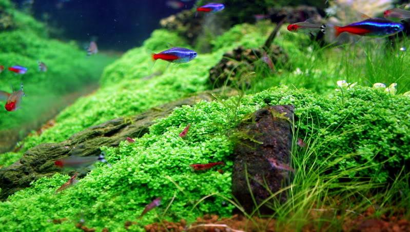 ốc thủy sinh