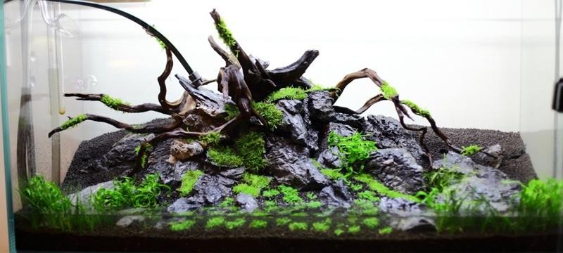 Cắm cây vào bể thủy sinh