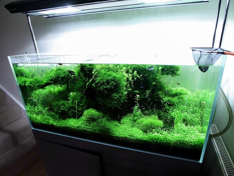 cây thủy sinh phát triển tự do