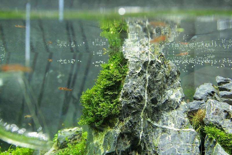 dán rêu thủy sinh vào đá