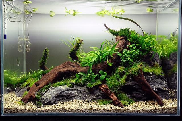1 ngày sau khi trồng cây