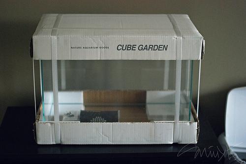 Tác giả lựa chọn hồ Cube garden của ADA