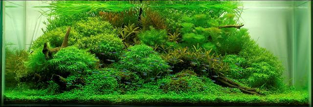 hồ thủy sinh phong cách tự nhiên
