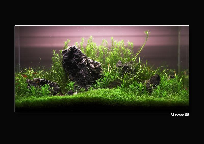 trồng cây bể thủy sinh