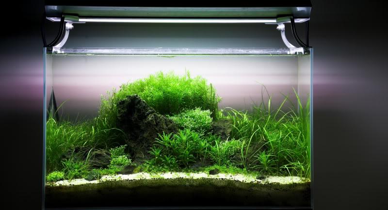 hồ thủy sinh phát triển tốt