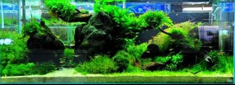 hồ rêu dương xỉ