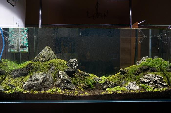 cây thủy sinh phát triển