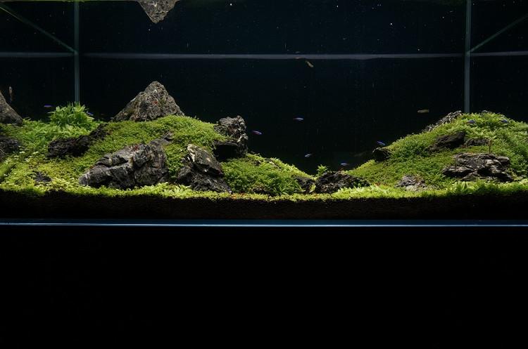 hồ thủy sinh bố cục núi đá