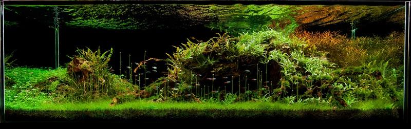 bể thủy sinh nước trong, cây khỏe