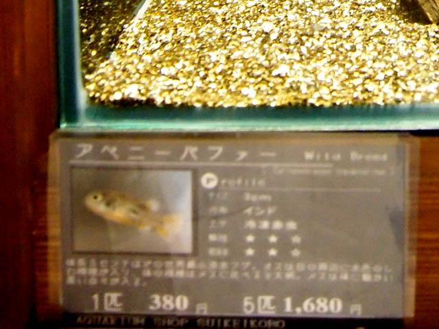 cá nóc thủy sinh