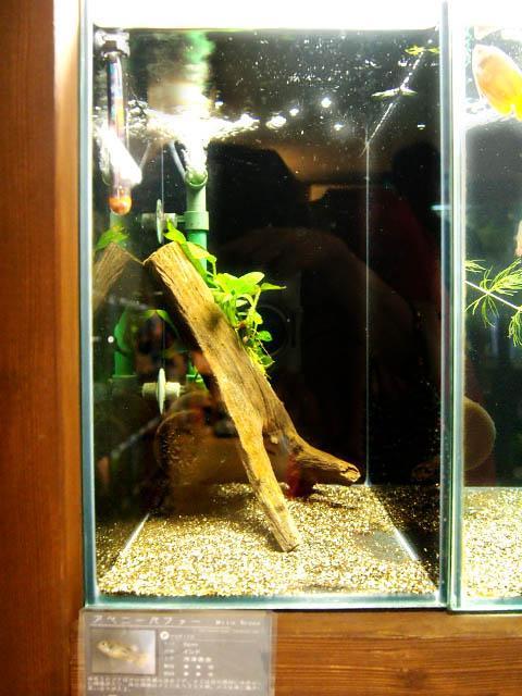 hồ dưỡng cá