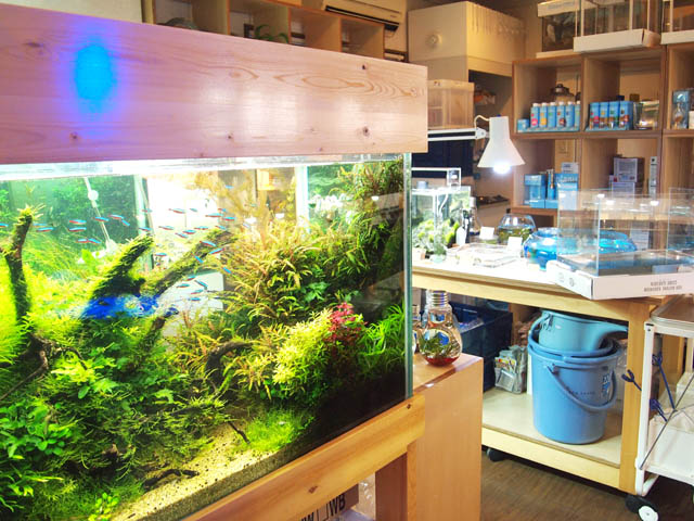 shop thủy sinh