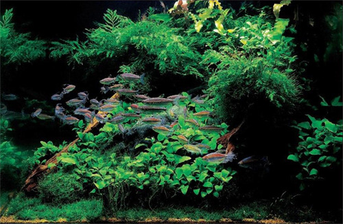 hồ thủy sinh với dương xỉ và ráy là chủ đạo