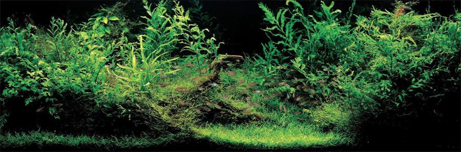 hồ thủy sinh tự nhiên ADA