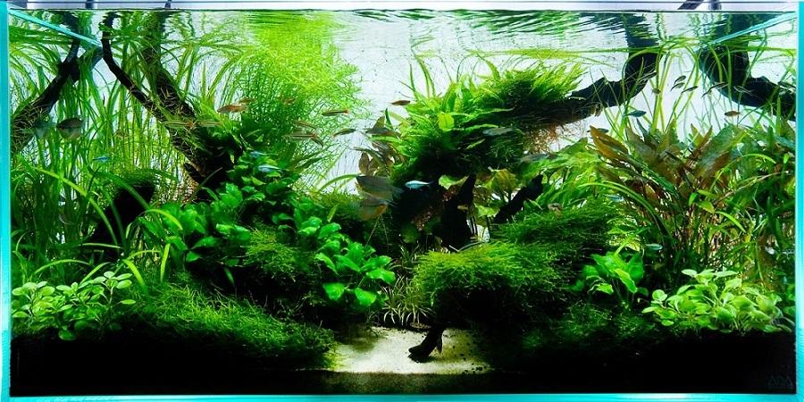 bể thủy sinh tự nhiên