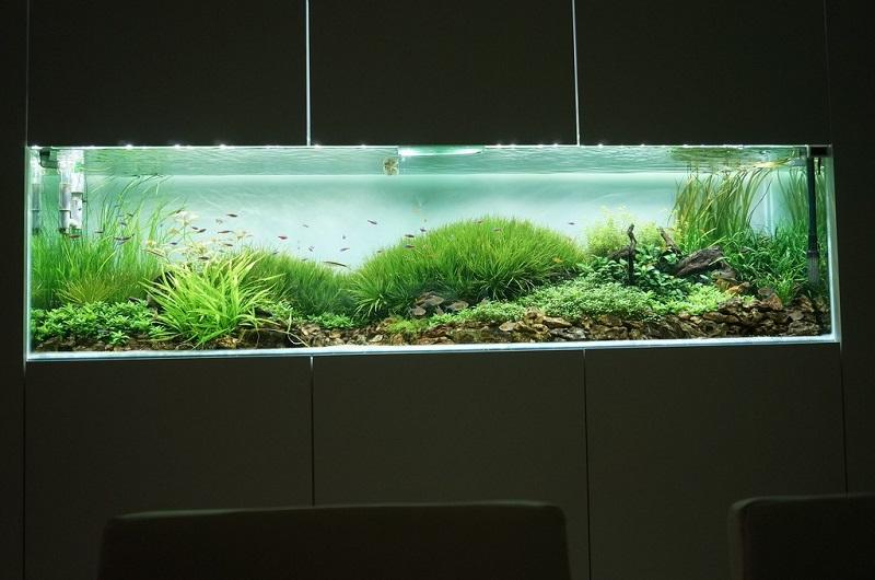 bể thủy sinh trang trí văn phòng