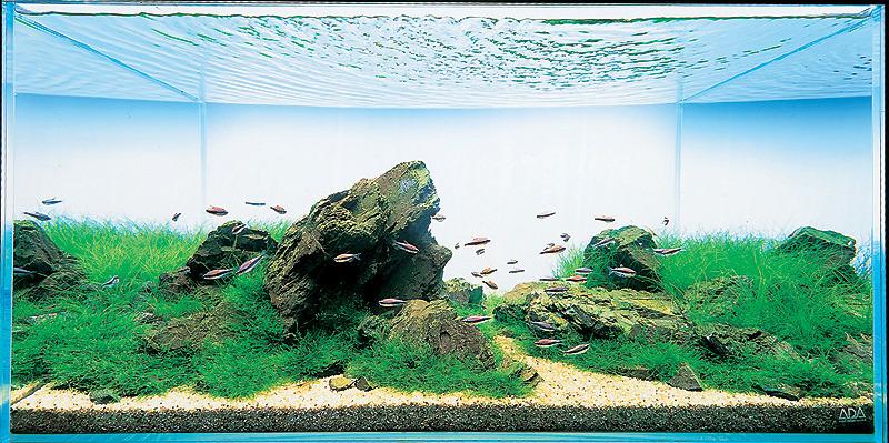 cây và cá trong iwagumi