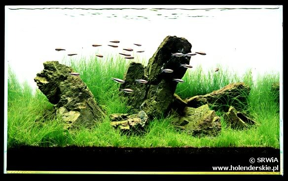 một bể thủy sinh iwagumi truyền thống