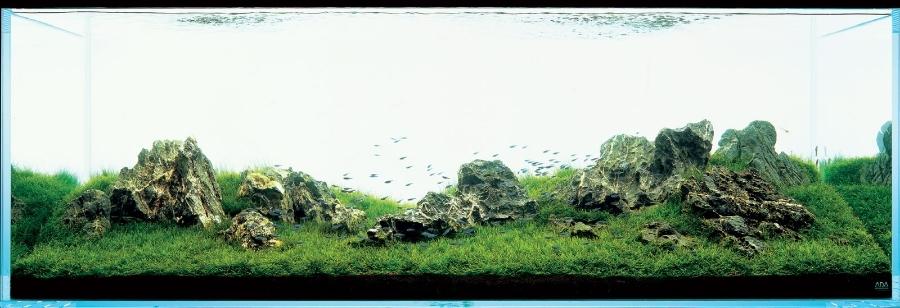 đá iwagumi không nằm ở điểm vàng