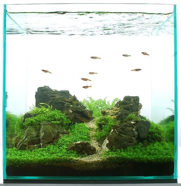 bể thủy sinh iwagumi hiện đại