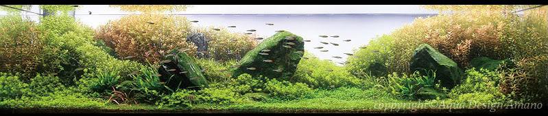 bể thủy sinh iwagumi của Fumio Hara