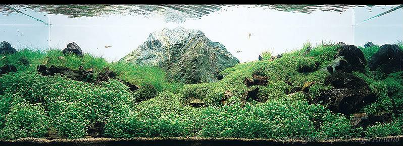bể thủy sinh iwagumi của Toshiharu Ishiwata