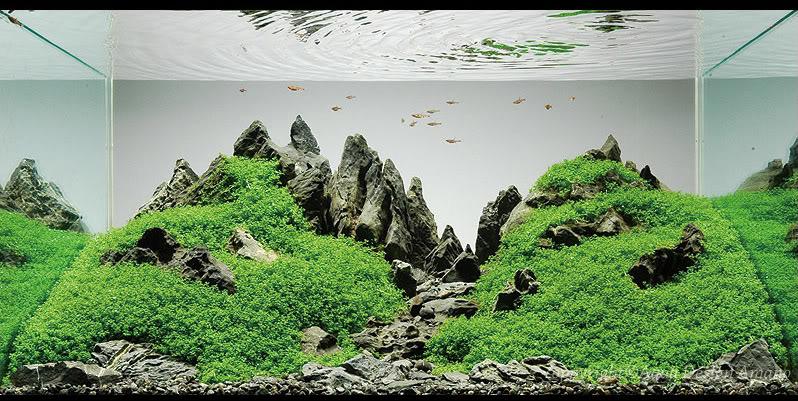 bể thủy sinh iwagumi của Peter Kirwan