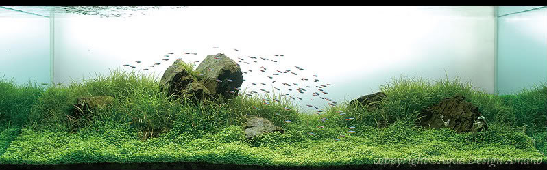 bể thủy sinh iwagumi của George Lo