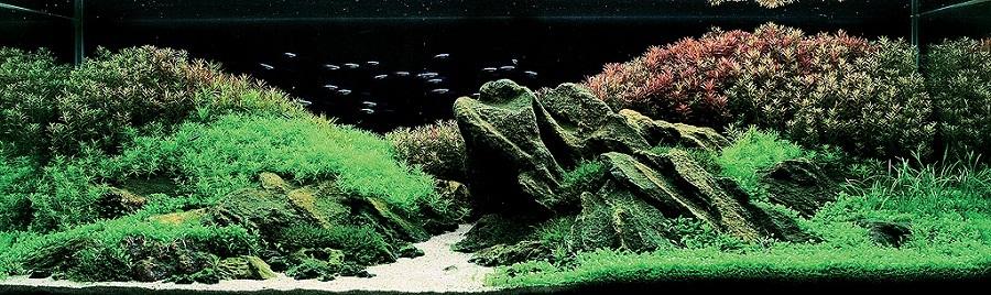 bể thủy sinh iwagumi của Nguyễn Thị Xuân Thủy