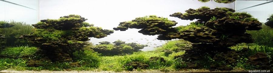 bể thủy sinh iwagumi của Trần Hoàng Long