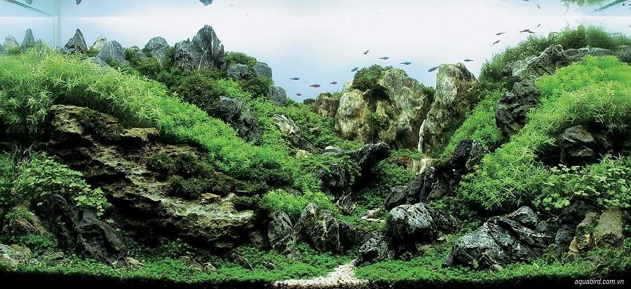 bể thủy sinh iwagumi của Koji Kogure