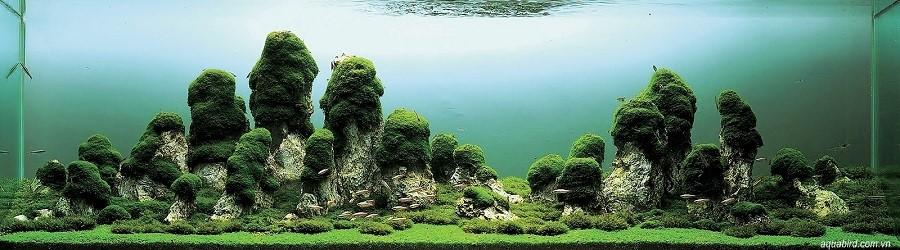 bể thủy sinh iwagumi của Pasquale Buonpane