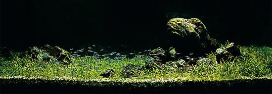 bể thủy sinh iwagumi 120 cm năm 1985