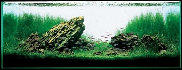 bể thủy sinh iwagumi 120cm năm 2001