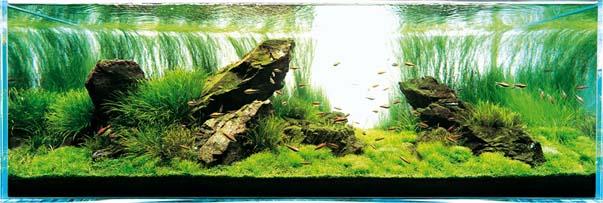 bể thủy sinh iwagumi 180cm năm 2003