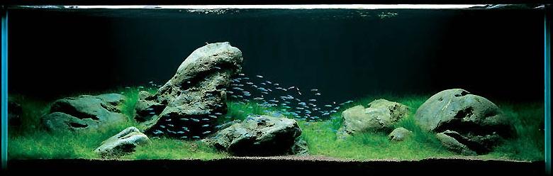 bể thủy sinh iwagumi 180cm năm 2001