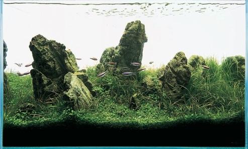 bể thủy sinh iwagumi 60cm năm 2001