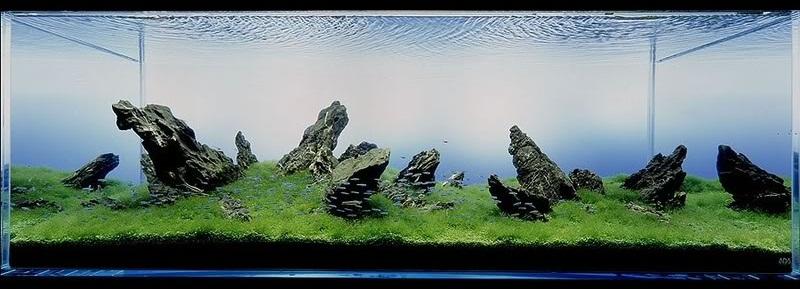 bể thủy sinh iwagumi 180cm năm 2005