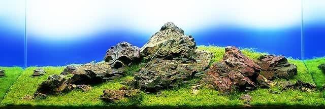 bể thủy sinh iwagumi 120cm năm 1997