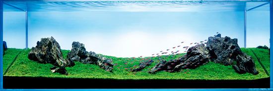 bể thủy sinh iwagumi 180cm năm 2006