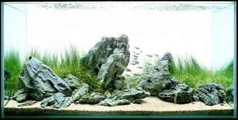 bể thủy sinh iwagumi 120cm năm 2002