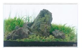 cây trồng trong iwagumi