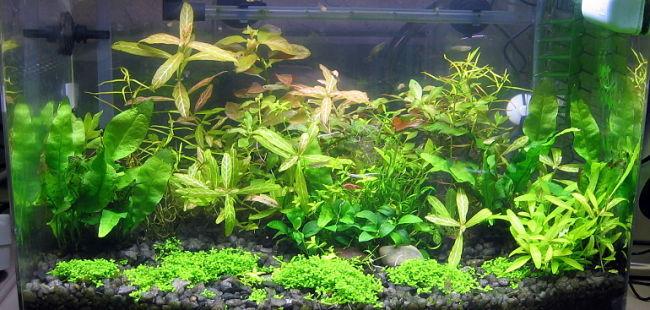 lỗi trồng cây trong hồ thủy sinh